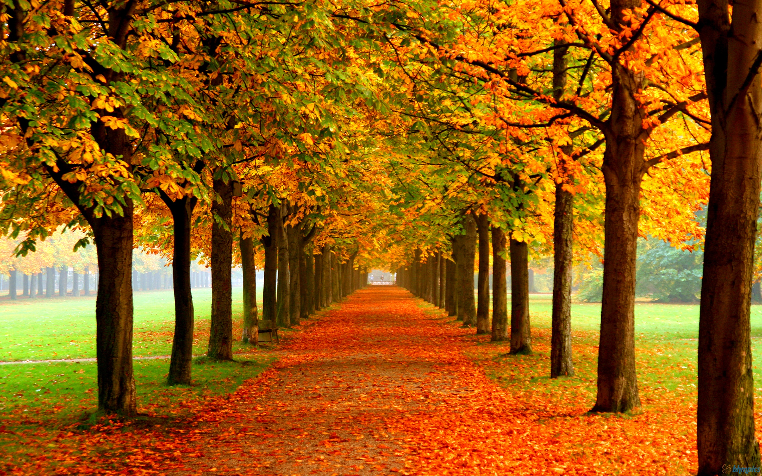 Image result for autumn school